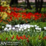 Persian garden Park10