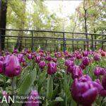 Persian garden Park12