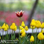 Persian garden Park13