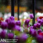 Persian garden Park18
