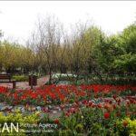 Persian garden Park20