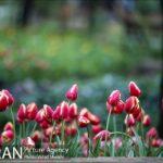 Persian garden Park24