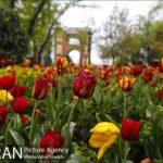 Persian garden Park26