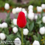 Persian garden Park29