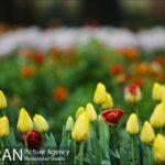 Persian garden Park3