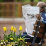 Persian garden Park31