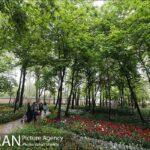 Persian garden Park38