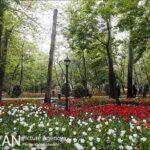 Persian garden Park40