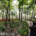 Persian garden Park41