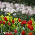 Persian garden Park42