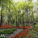 Persian garden Park45