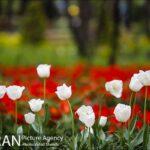 Persian garden Park5