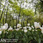 Persian garden Park6