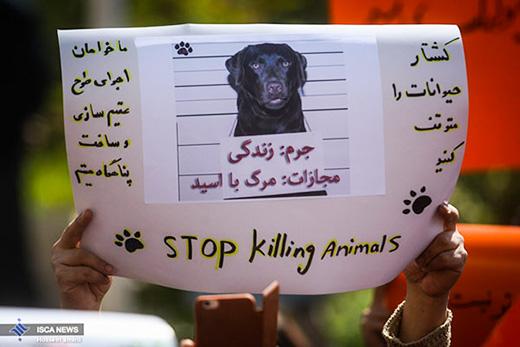 dogs in Shiraz00