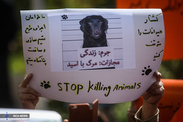 dogs in Shiraz14
