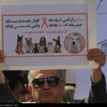 dogs in Shiraz21