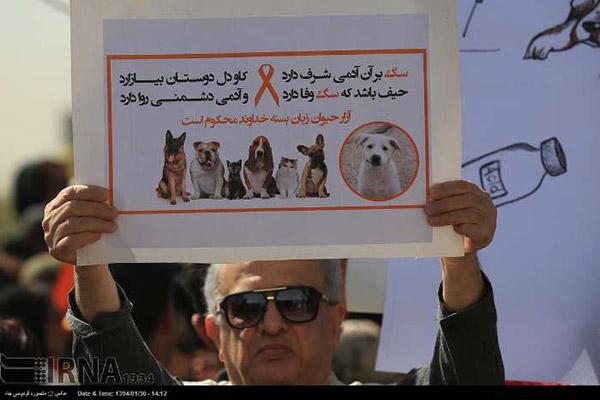 dogs in Shiraz21