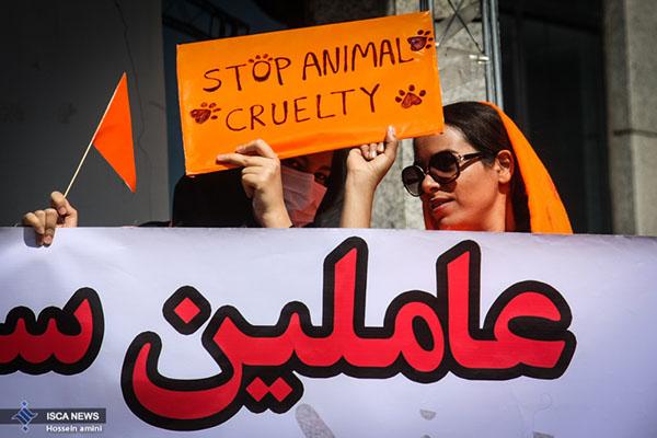 dogs in Shiraz29