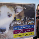 dogs in Shiraz8