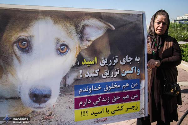 dogs in Shiraz8