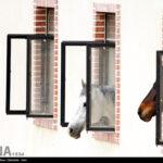 horse-jumping38