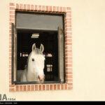 horse-jumping39