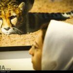 Cheetah56