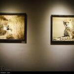 Cheetah62