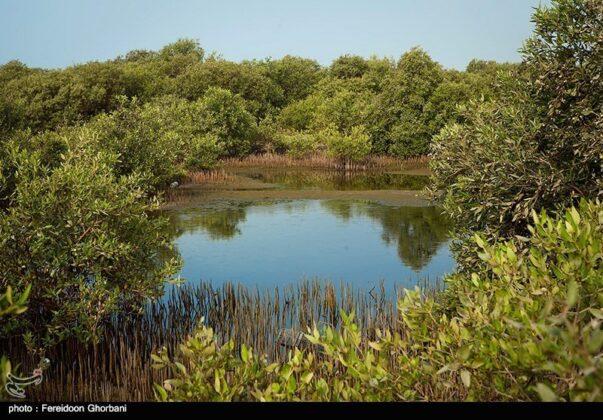 Hara Forests of Qeshm Island - Iran