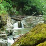 Iran Forest