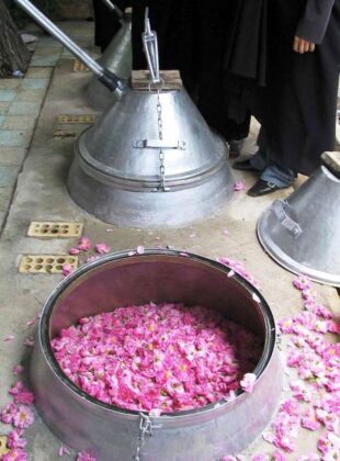 Rosewater Extraction