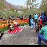 Tulip Festival_7