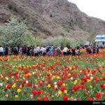 Tulip Festival_9