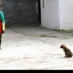 injured animals11
