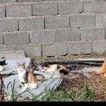 injured animals13