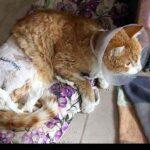 injured animals14