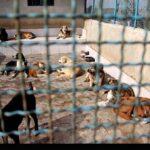 injured animals2