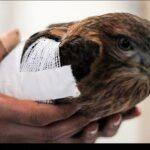 injured animals20