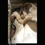 injured animals22