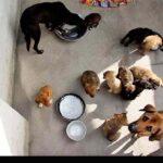 injured animals5