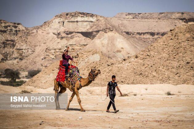Riding Camel on Qeshm Island
