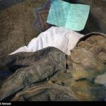 Iranian divers killed5