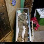 Iranian divers killed8