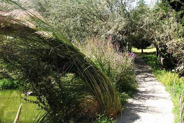 National Botanical Garden7