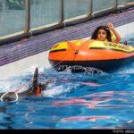 dolphinarium-10