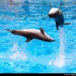 dolphinarium-11