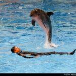 dolphinarium-17
