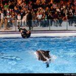 dolphinarium-19