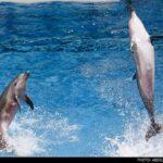 dolphinarium-2