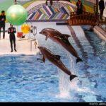 dolphinarium-24